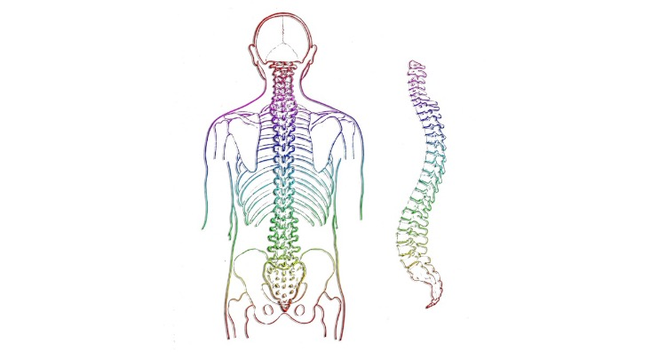 Human spines are so inefficient that 80% of people suffer from neck or back pain at some point in their lives.