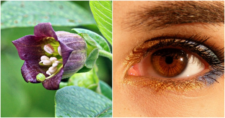 Belladonna eye-drop