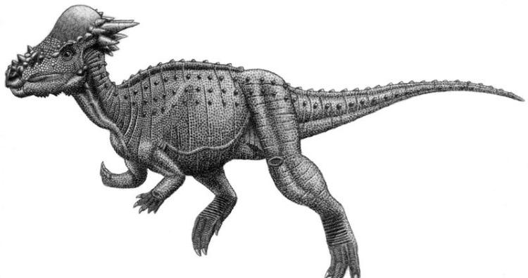 Pachycephalosauria jmallon