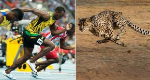 facts about usain bolt