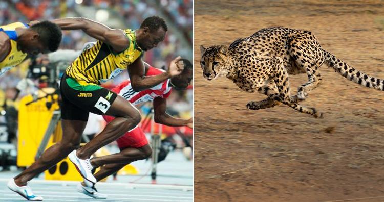 Bolt's speed