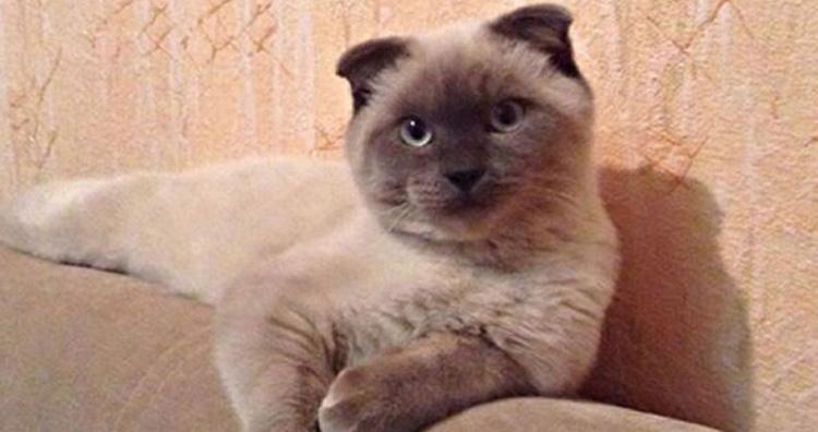 Barsik cat