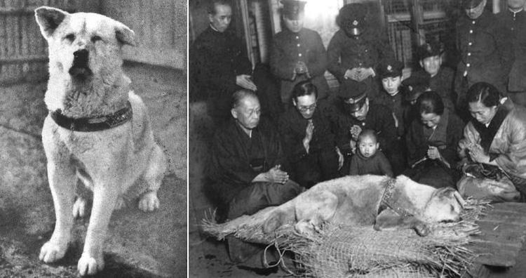 Hachiko, the famous loyal dog