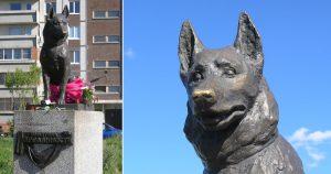 Kostya, the dog
