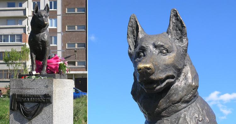 Kostya, the loyal dog