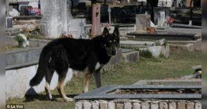 Capitan, the dog