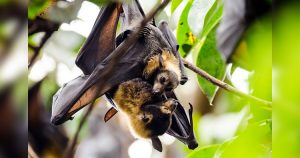 Mother bat