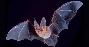 Hunting bat
