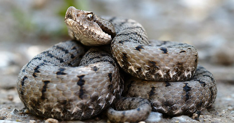Snake Detection Theory