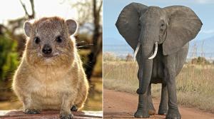 bizarre animal facts
