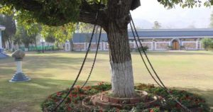 Banyan tree pakistan under arrest