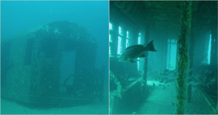Marine life underwater subway cars