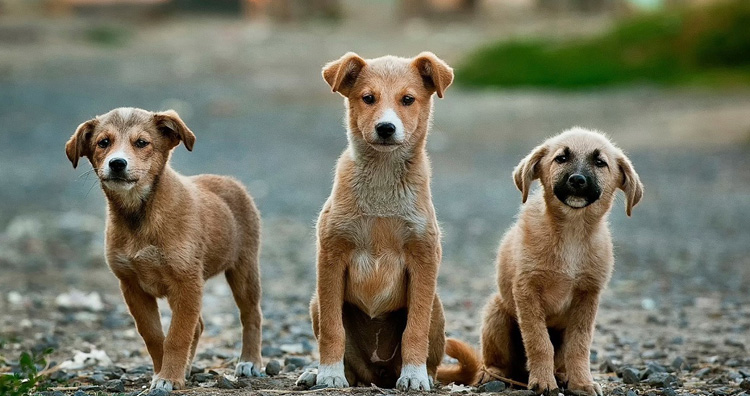 UK bans pet shops from selling puppies