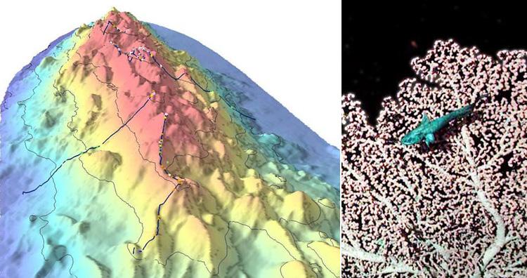 Davidson Seamount