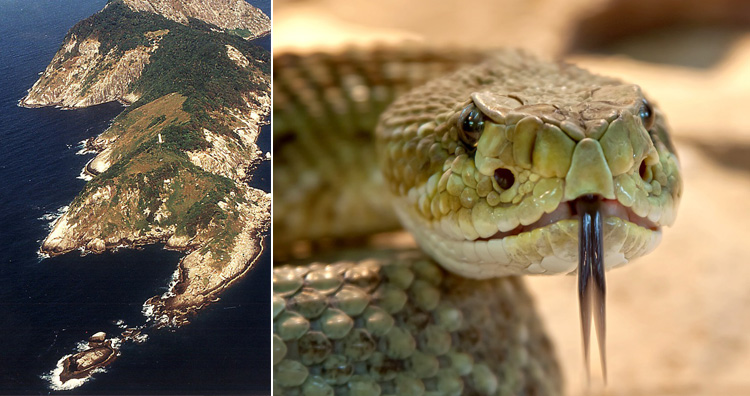 Snakes island