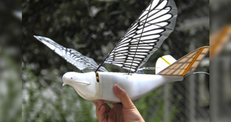Drone dove