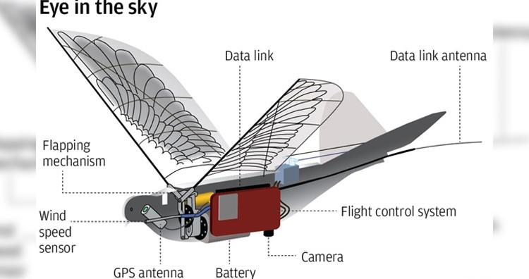 Drone dove structure