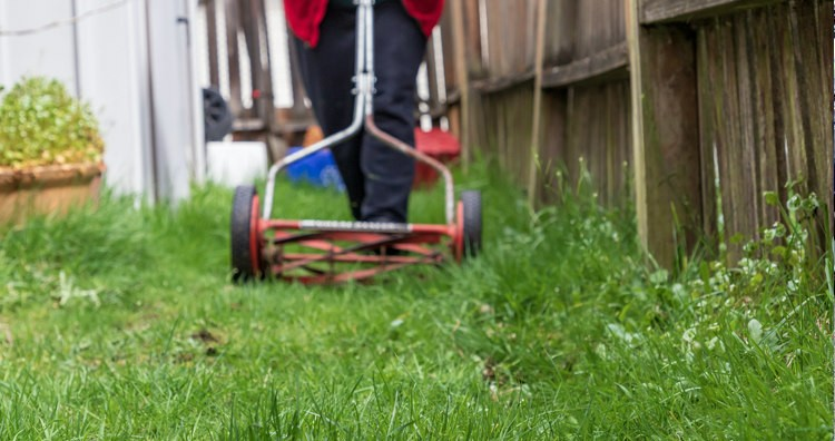 Overgrown Lawn and Lawnmower
