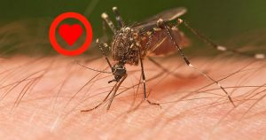 Mosquitoes smell Blood Type