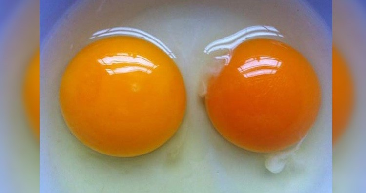 Egg yolk color
