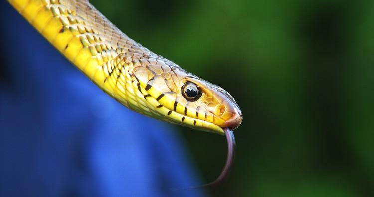 Snake bite and venom