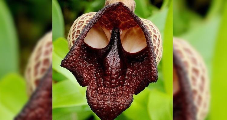 Darth Vader Flower