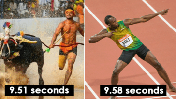 Buffalo racers from india are being compared to usain bolt