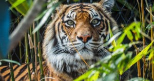 Indian Couple Buys Land Next to a Tiger Reserve