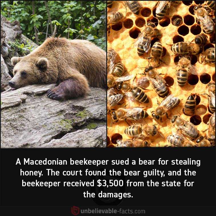 Macedonian beekeeper lawsuit