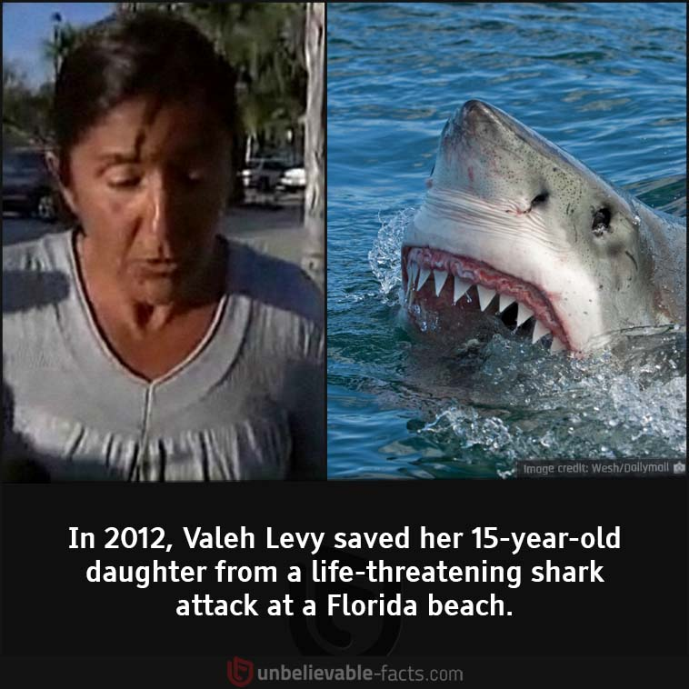 Valeh Levy saved her daughter from shark attack