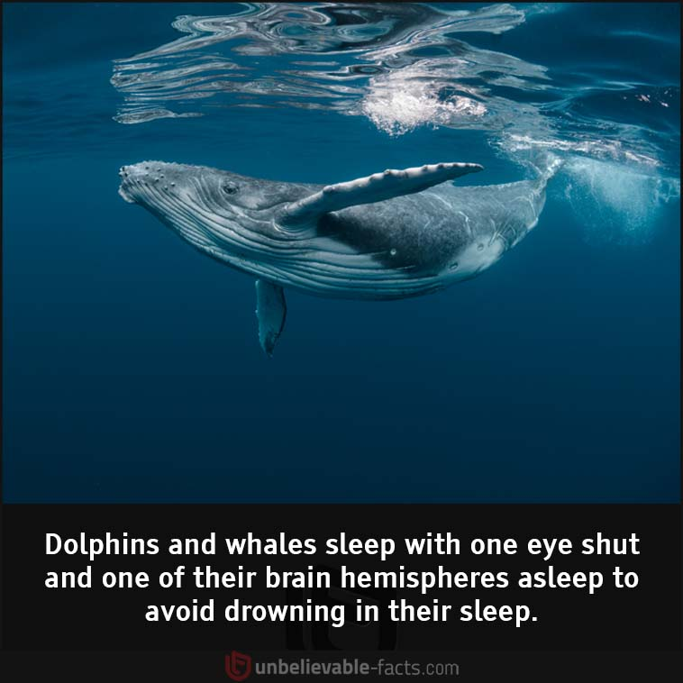 Dolphins and whales sleep with one eye shut