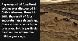 Things Found in the Desert