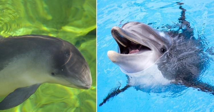 Porpoise & Dolphin