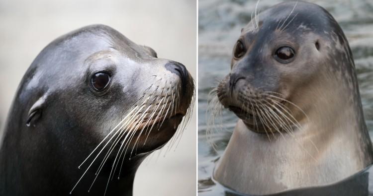 Sea Lion & Seal