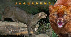 Fascinating cat breeds