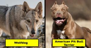 dangerous banned dogs