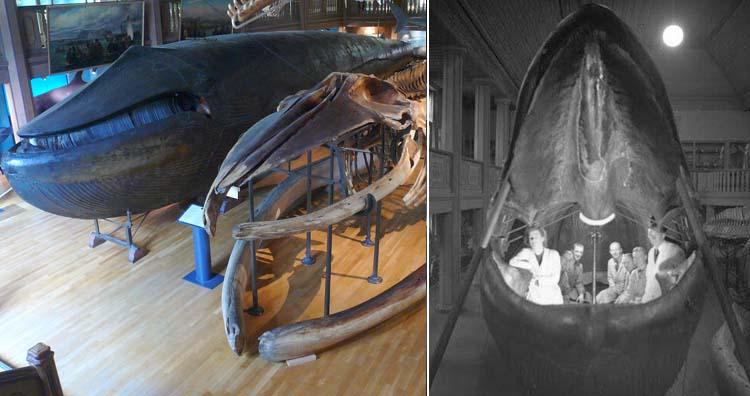 The Malm whale