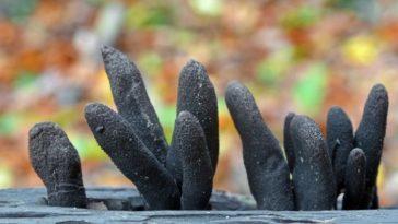 Weird Parasites and Fungi