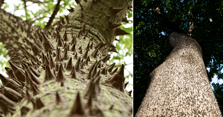 The Sandbox Tree