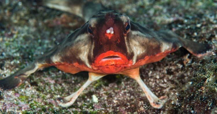 Strangest Yet Fascinating Animal Evolutions