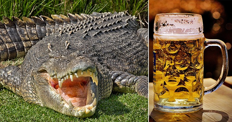 Beer and crocodile